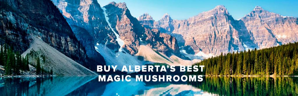 Buy Alberta's Best Magic Mushrooms Online