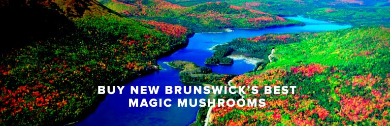 Buy New Brunswick's Best Magic Mushrooms