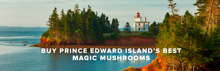 Buy Prince Edward Island Magic Mushroom