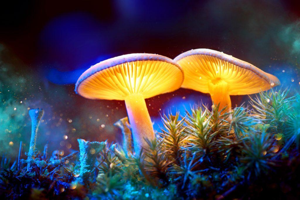 The-Push-to-Decriminalize-Magic-Mushrooms-