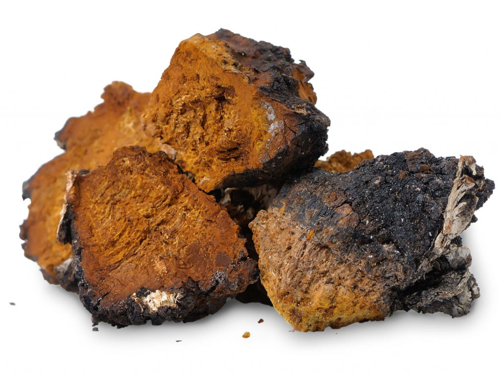 chaga-mushrooms-to-improve-your-health