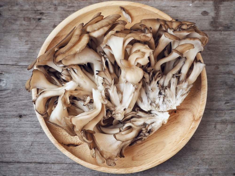 maitake-mushroom-benefits-uses-and-where-to-buy