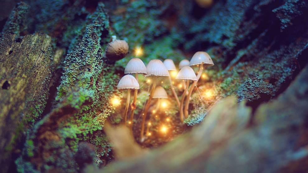 microdose-magic-mushrooms-spiritually-togetherness-treat-depression