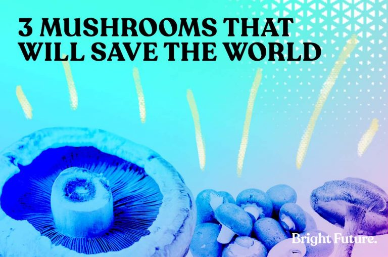 3 Types Of Mushrooms That Will Save The World