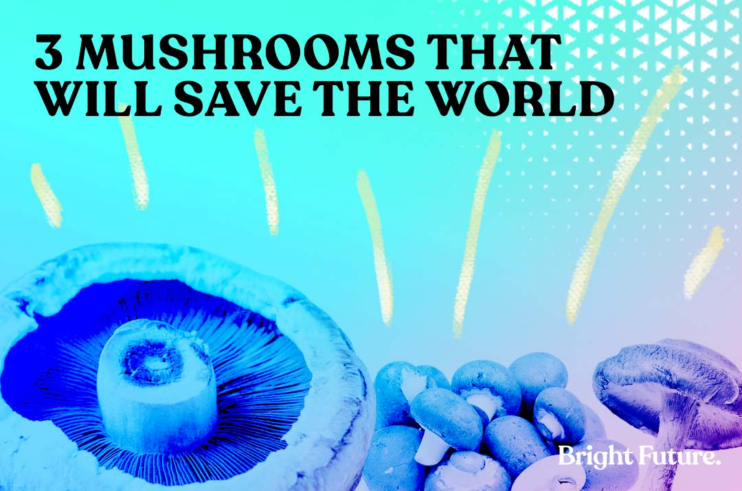 3 mushrooms that will save the world