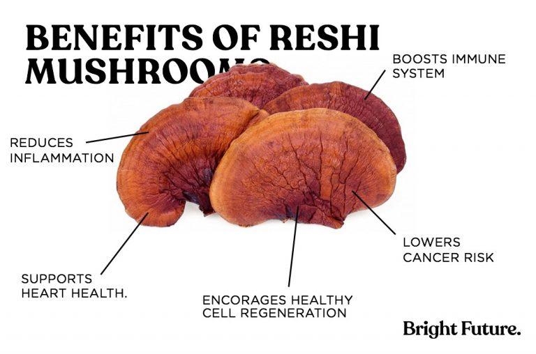 benefits of reshi mushrooms